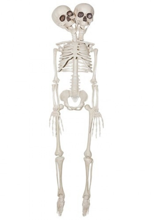 """The 2 Headed Skeleton Prop has moveable joints and is approximately 20"""" tall. Perfect for your haunted house! #%20"""